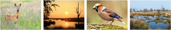 workshop / cursus fotografie in Drenthe. Fotocursus in omgeving Assen, Emmen, Meppel, Dwingeloo, Roden, Hoogeveen en Borger